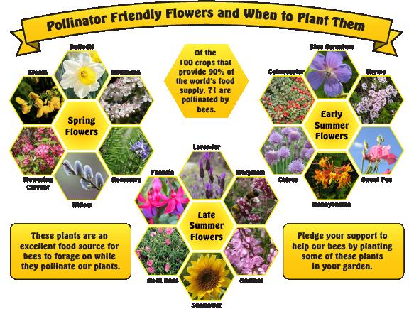letitbeeflowers