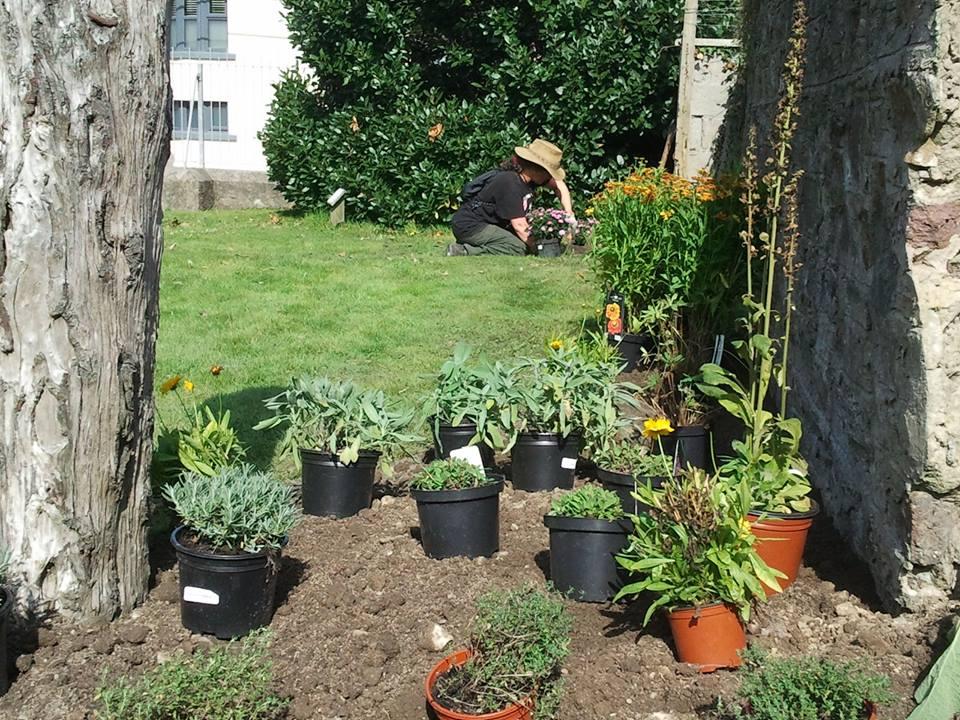 redmondparkplanting_sep2014